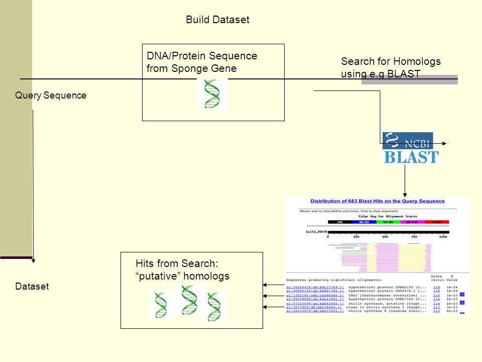 Build Dataset DNA/Protein Sequence from Sponge Gene