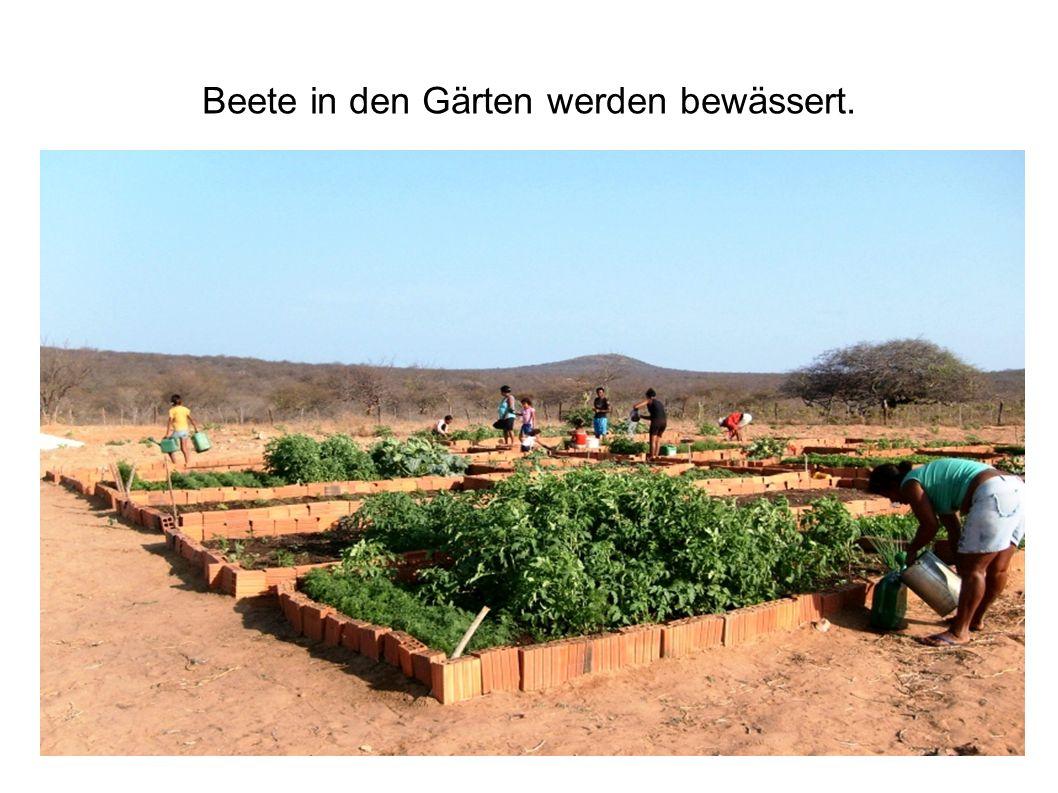 Beete in den Gärten werden bewässert.