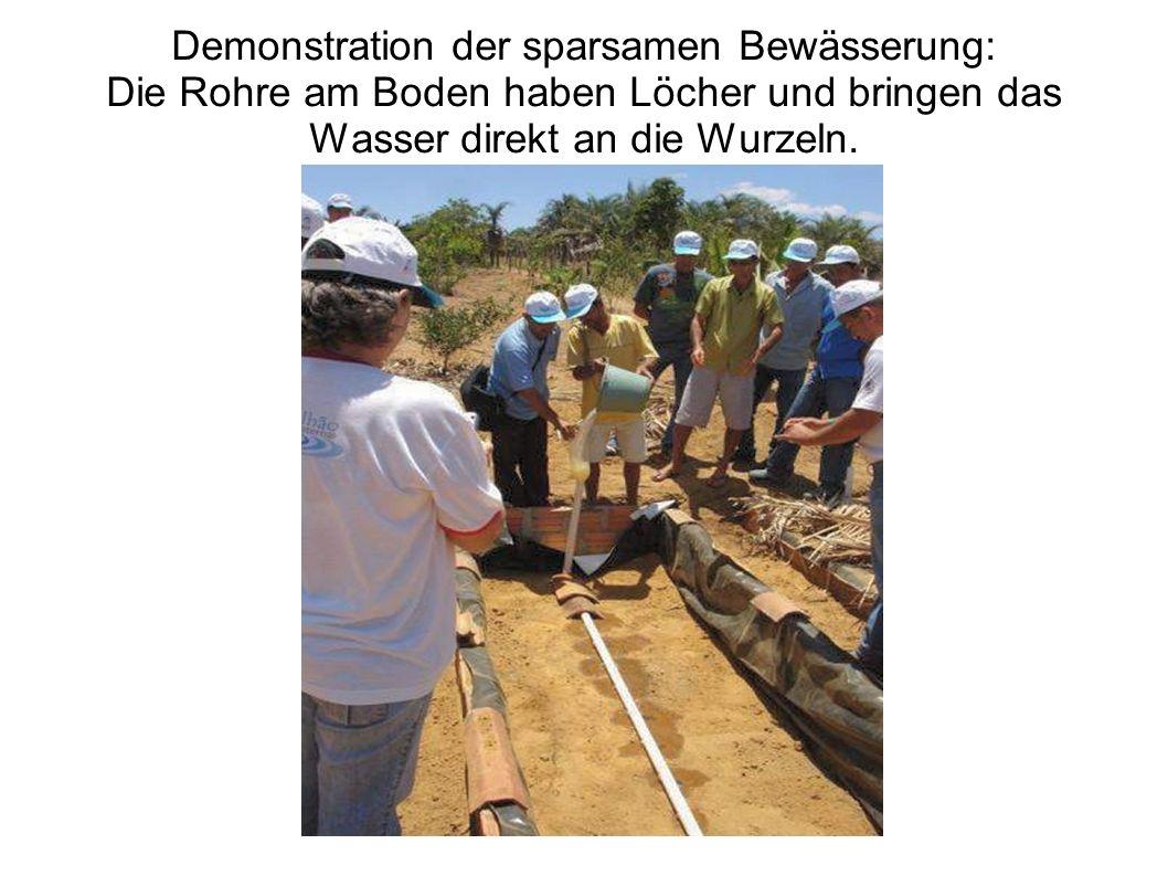 Demonstration der sparsamen Bewässerung: Die Rohre am Boden haben Löcher und bringen das Wasser direkt an die Wurzeln.