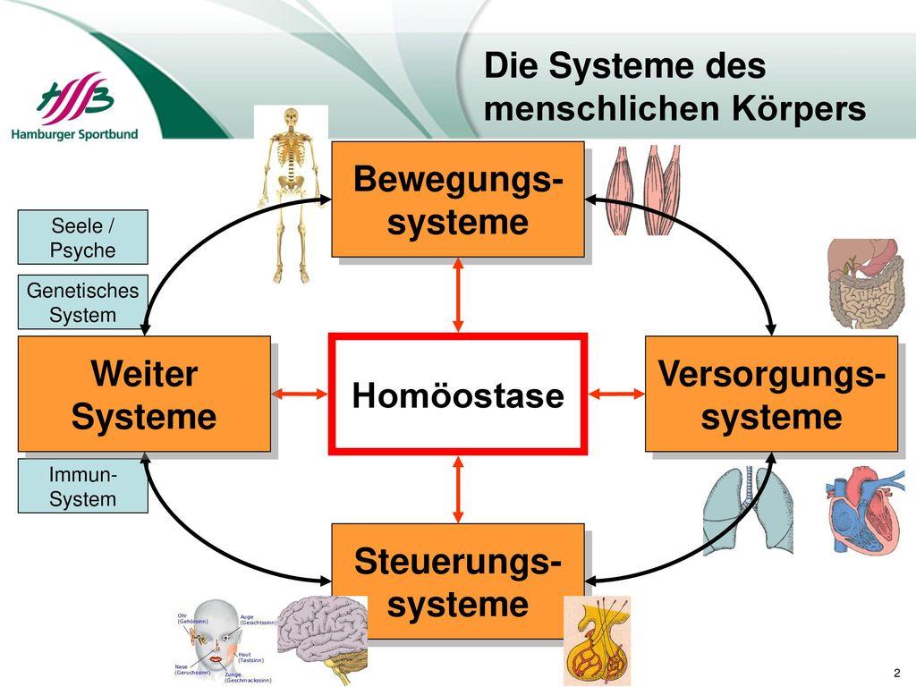 Großzügig Die Körpersysteme Fotos - Physiologie Von Menschlichen ...
