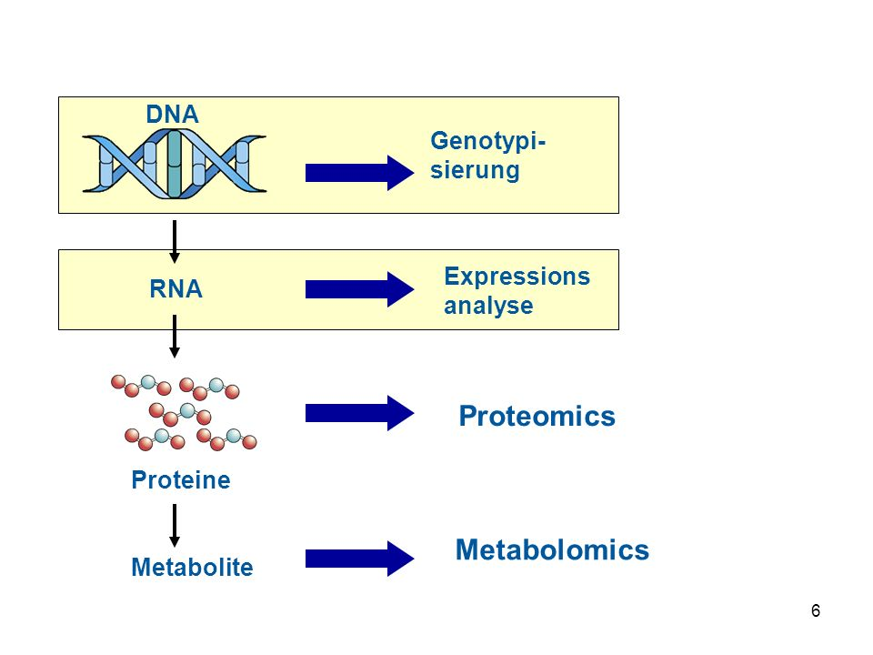 Proteomics Metabolomics DNA Genotypi-sierung Expressions analyse RNA