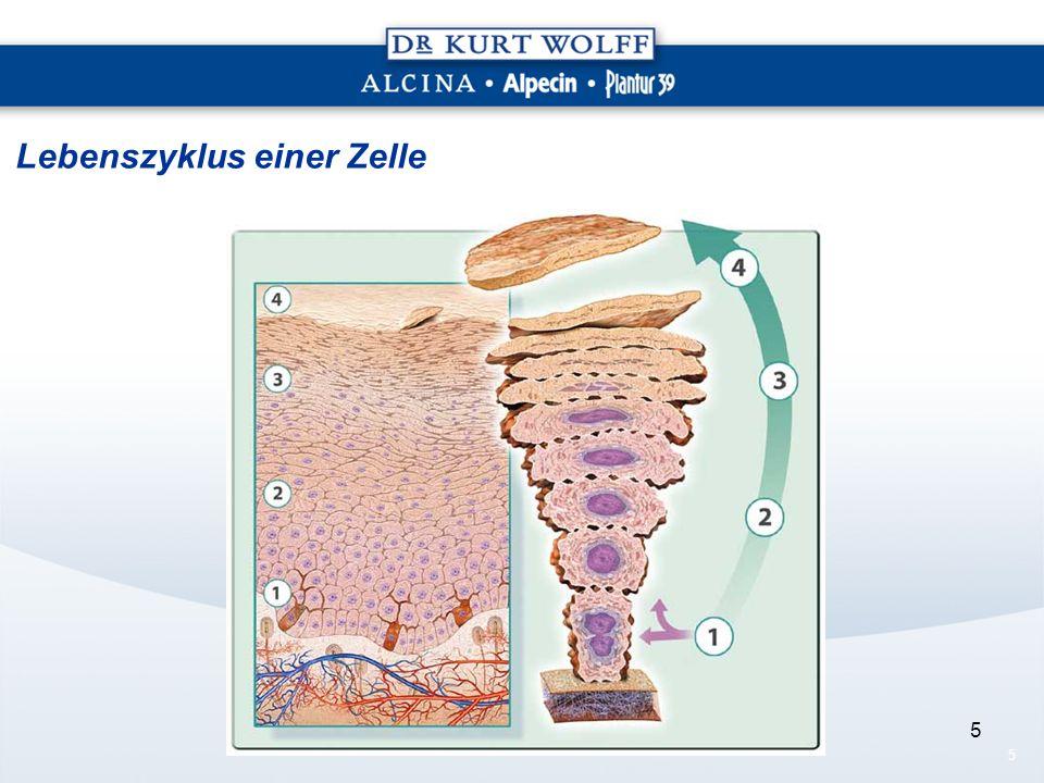 Lebenszyklus einer Zelle