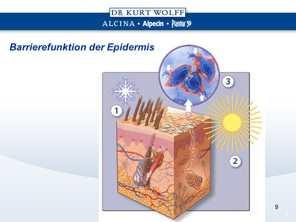 Barrierefunktion der Epidermis