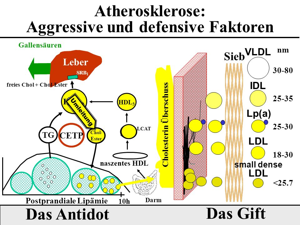 Aggressive und defensive Faktoren