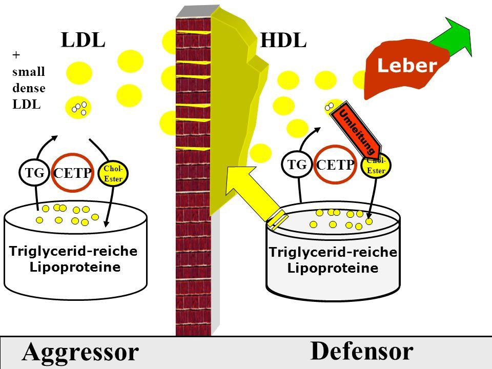 Aggressor Defensor LDL HDL Leber CETP CETP + small dense LDL TG TG