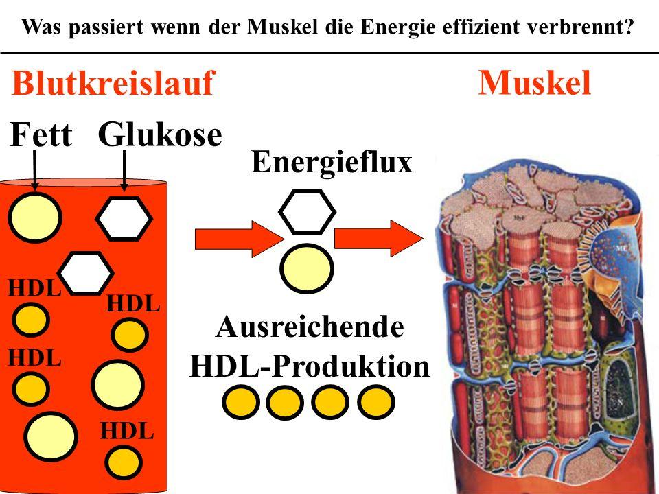 Was passiert wenn der Muskel die Energie effizient verbrennt