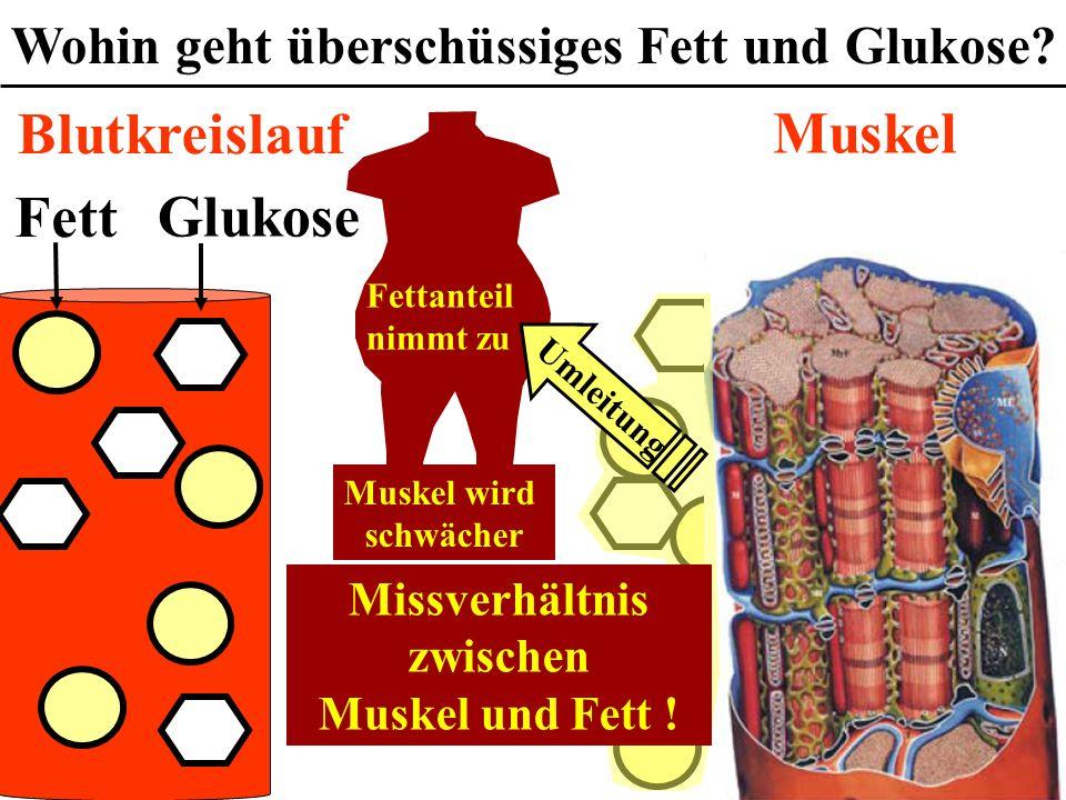 Wohin geht überschüssiges Fett und Glukose Missverhältnis zwischen