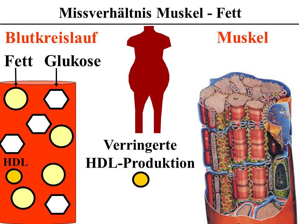 Missverhältnis Muskel - Fett