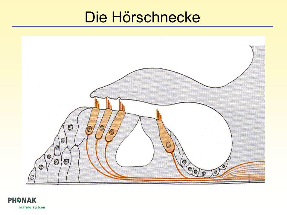 Die Hörschnecke