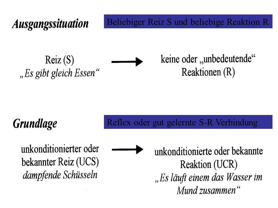 Beliebiger Reiz S und beliebige Reaktion R