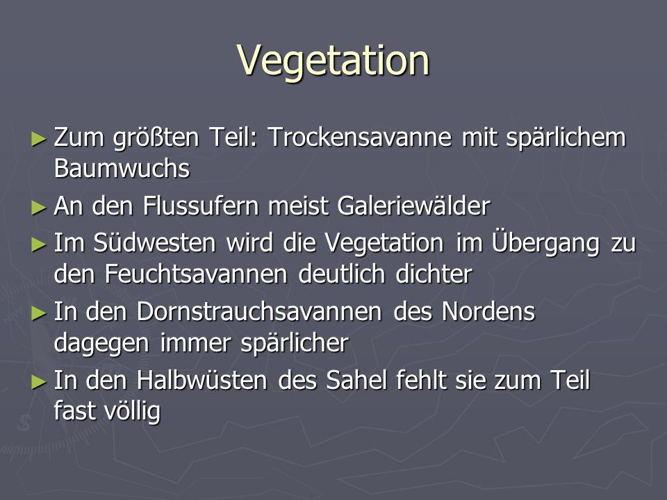 Vegetation Zum größten Teil: Trockensavanne mit spärlichem Baumwuchs