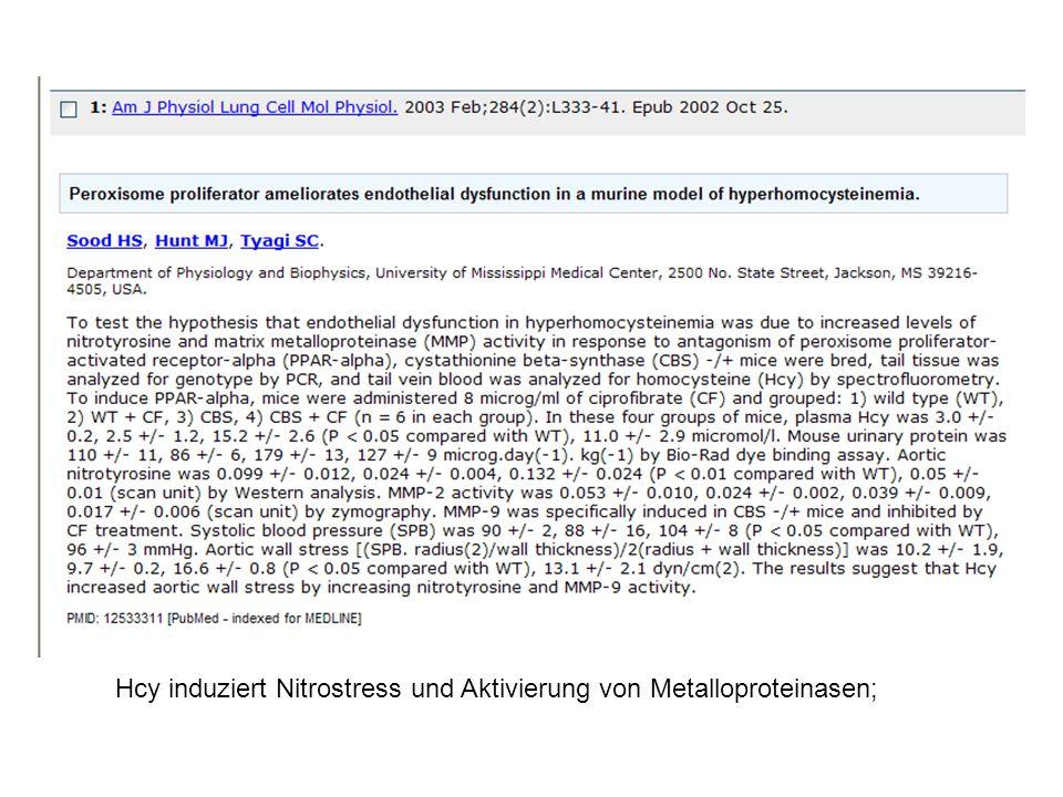 Hcy induziert Nitrostress und Aktivierung von Metalloproteinasen;