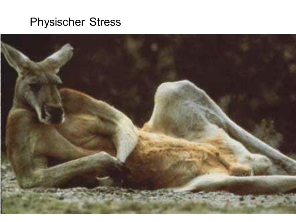 Physischer Stress
