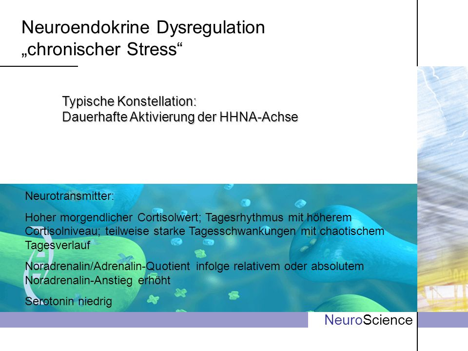 "Neuroendokrine Dysregulation ""chronischer Stress"