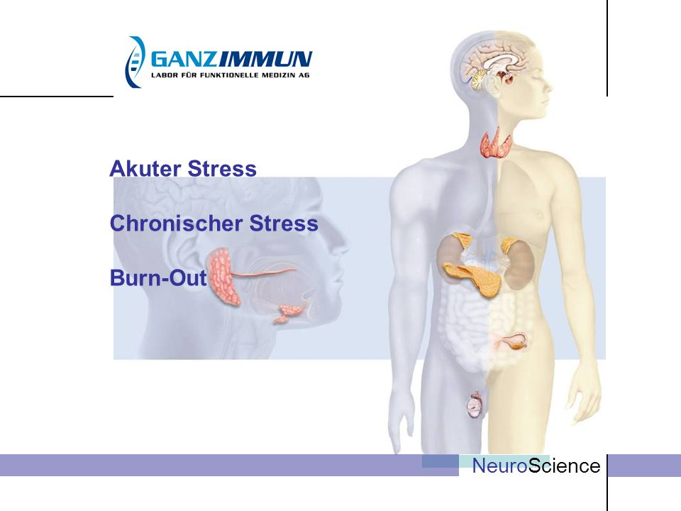 Akuter Stress Chronischer Stress Burn-Out NeuroScience