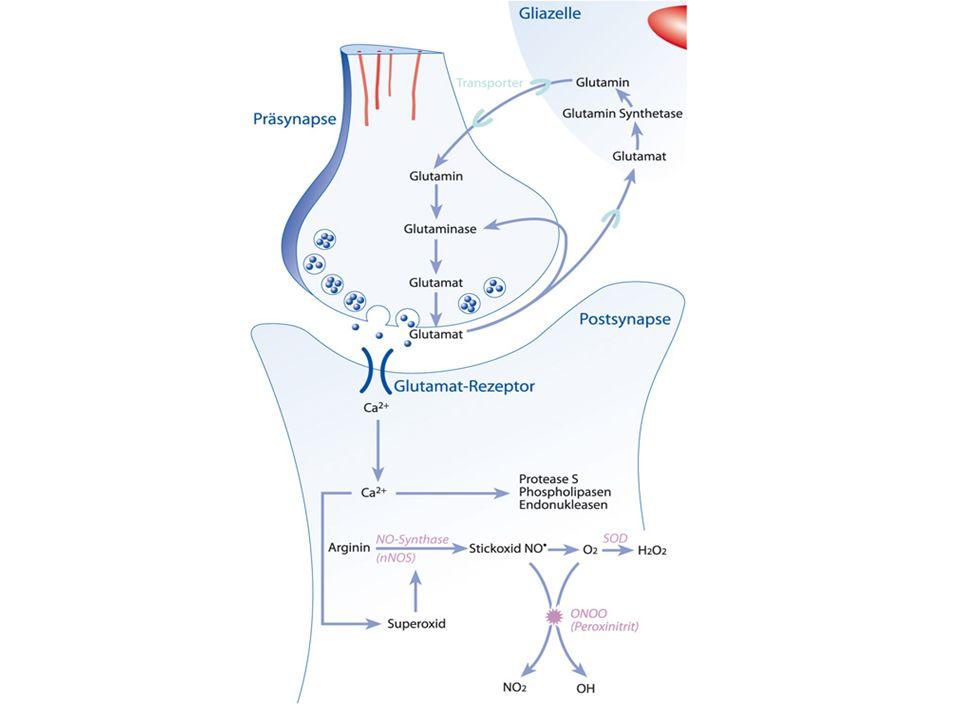 Glutamat bindet an Glutamat-Rezeptor und ermöglicht Natriumeinstrom  Aktionspotential!