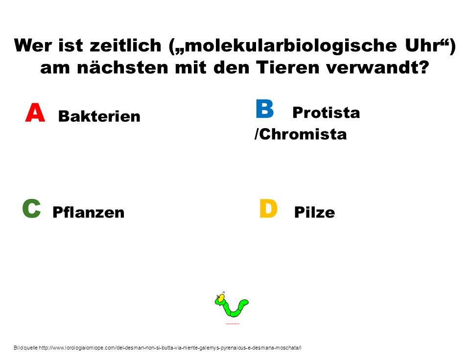 B Protista /Chromista A Bakterien C Pflanzen D Pilze