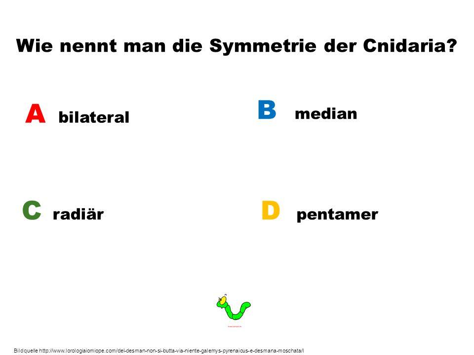 Wie nennt man die Symmetrie der Cnidaria