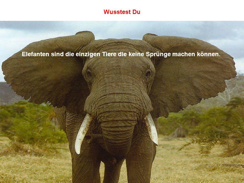 Elefanten sind die einzigen Tiere die keine Sprünge machen können.