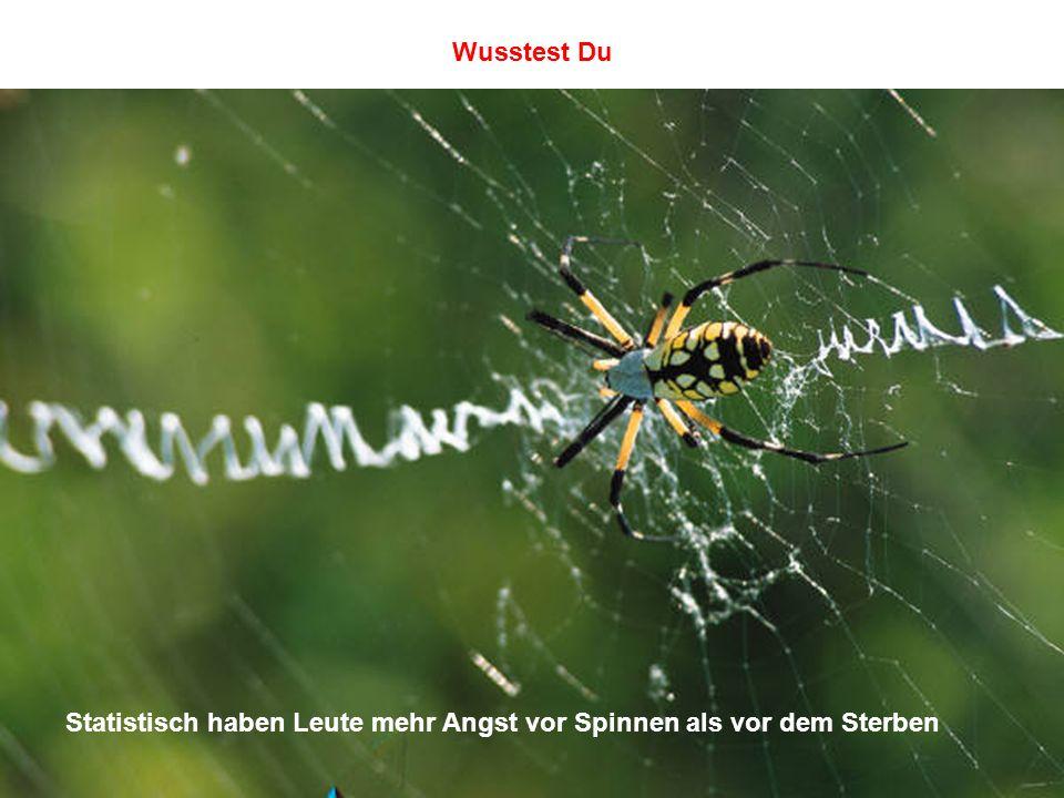Wusstest Du Statistisch haben Leute mehr Angst vor Spinnen als vor dem Sterben