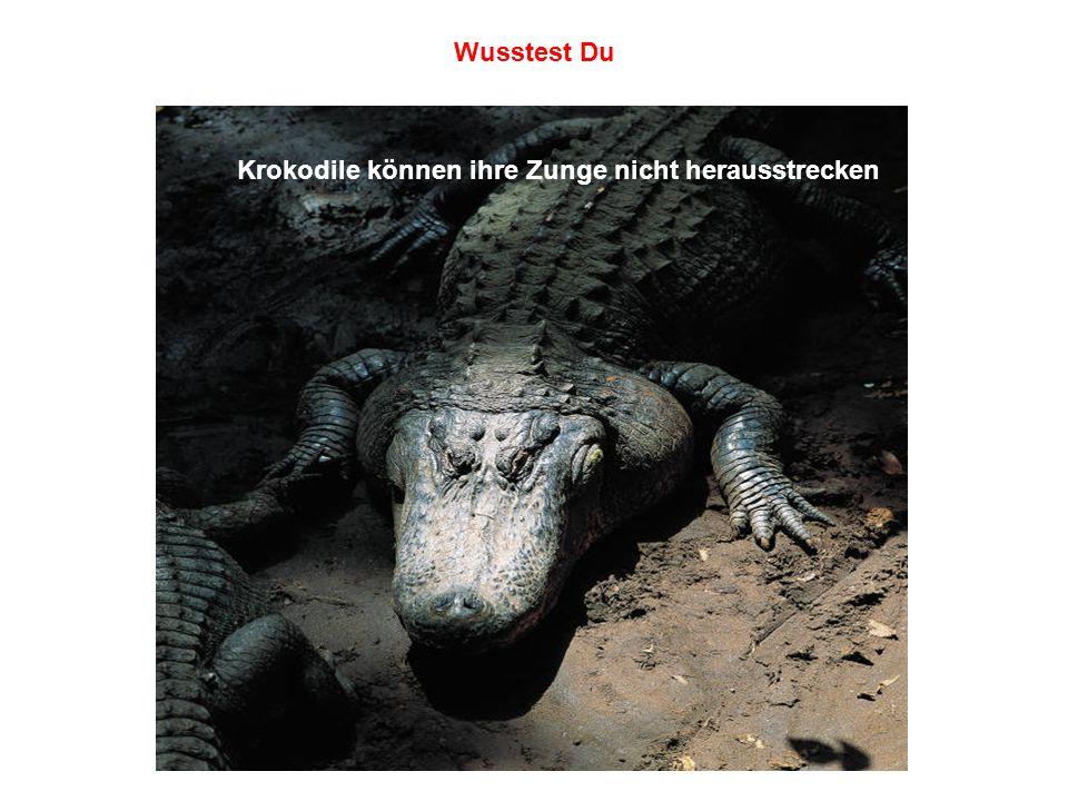 Wusstest Du Krokodile können ihre Zunge nicht herausstrecken