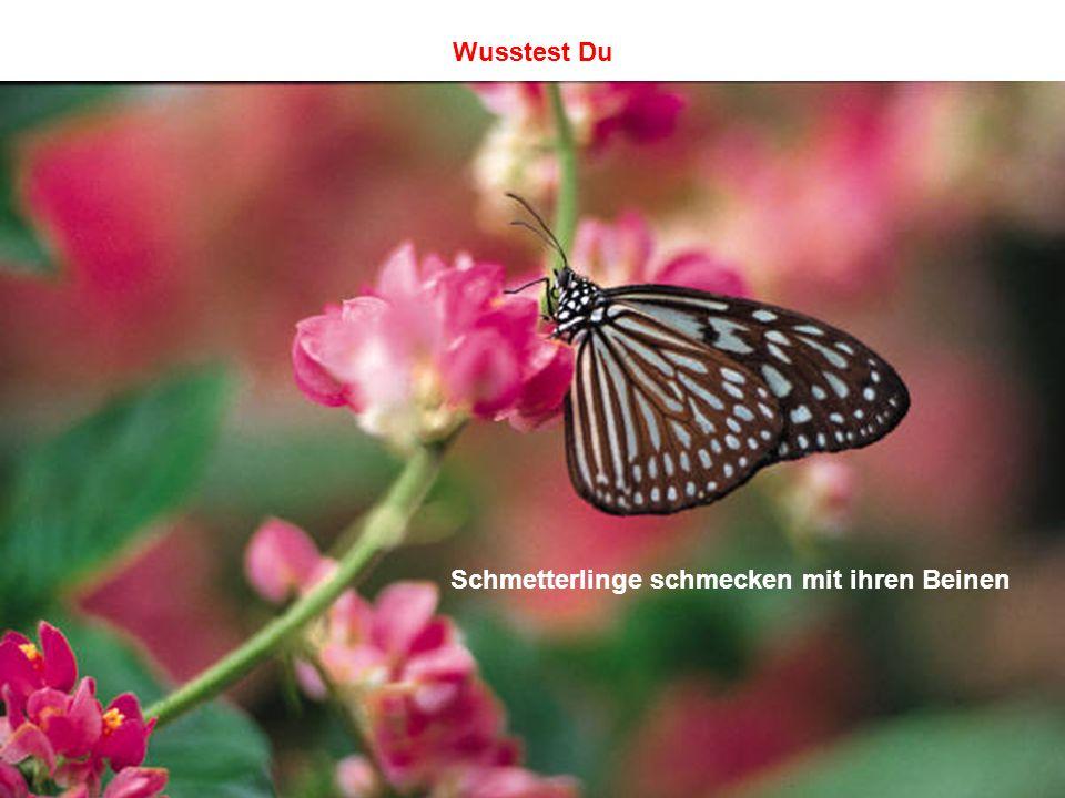 Wusstest Du Schmetterlinge schmecken mit ihren Beinen