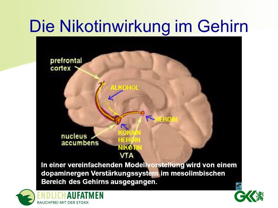 Die Nikotinwirkung im Gehirn