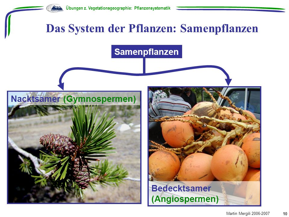 Das System der Pflanzen: Samenpflanzen