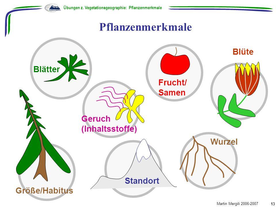 Pflanzenmerkmale Blüte Blätter Frucht/Samen Geruch (Inhaltsstoffe)