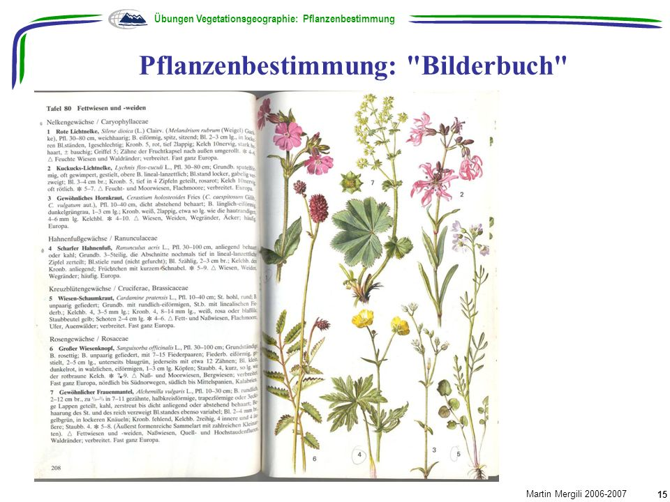 Pflanzenbestimmung: Bilderbuch