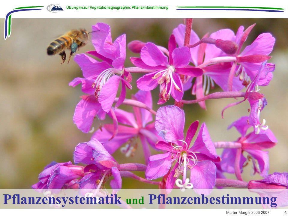 Pflanzensystematik und Pflanzenbestimmung