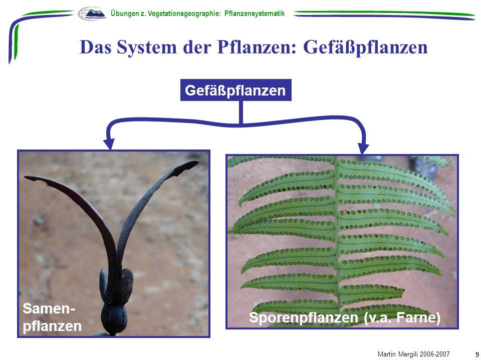 Das System der Pflanzen: Gefäßpflanzen