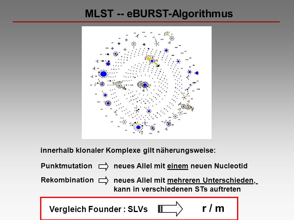 MLST -- eBURST-Algorithmus