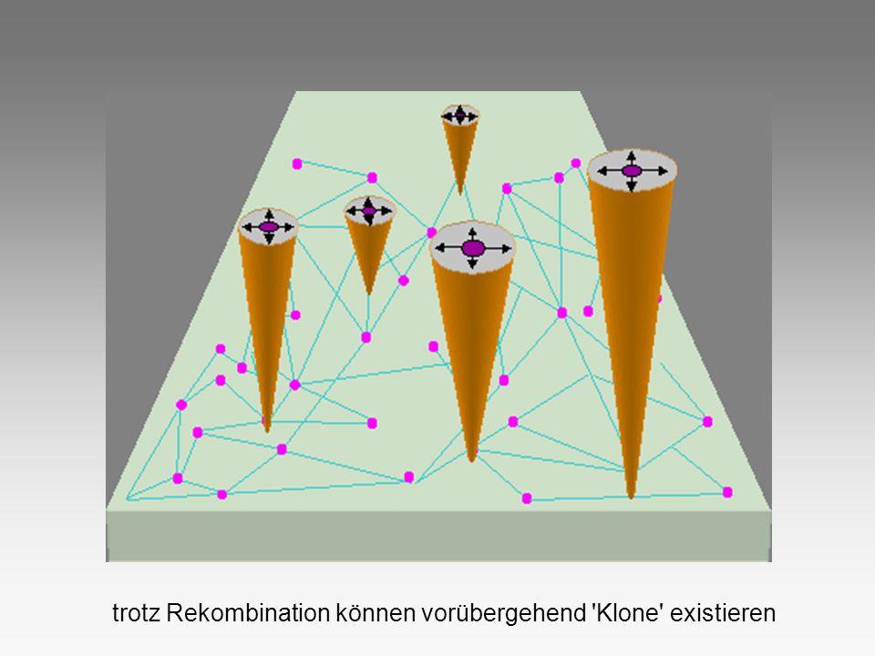 trotz Rekombination können vorübergehend Klone existieren