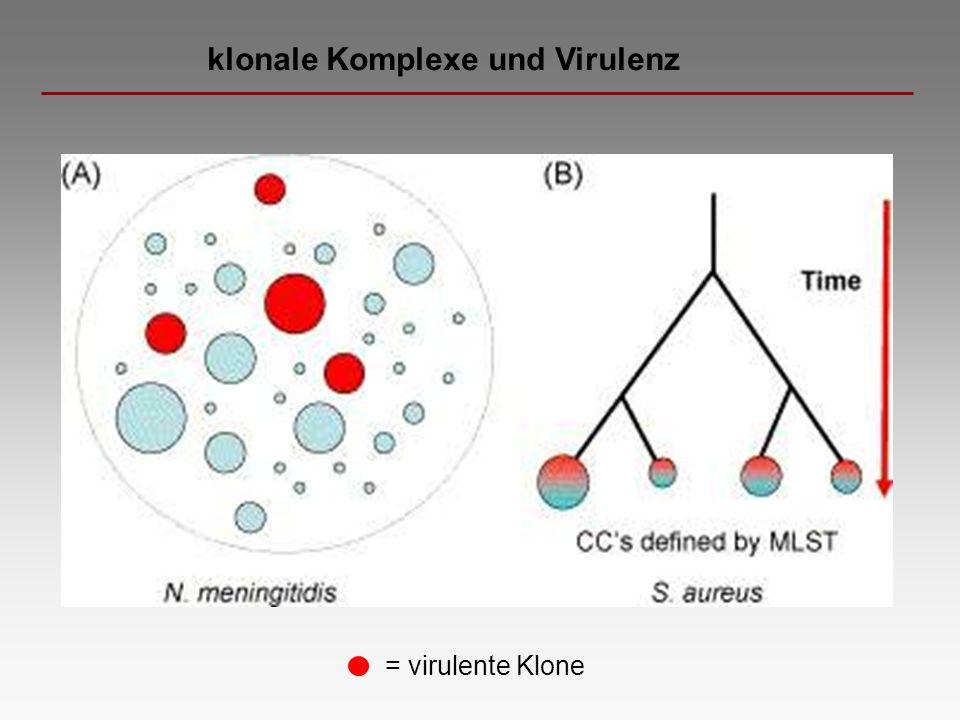 klonale Komplexe und Virulenz