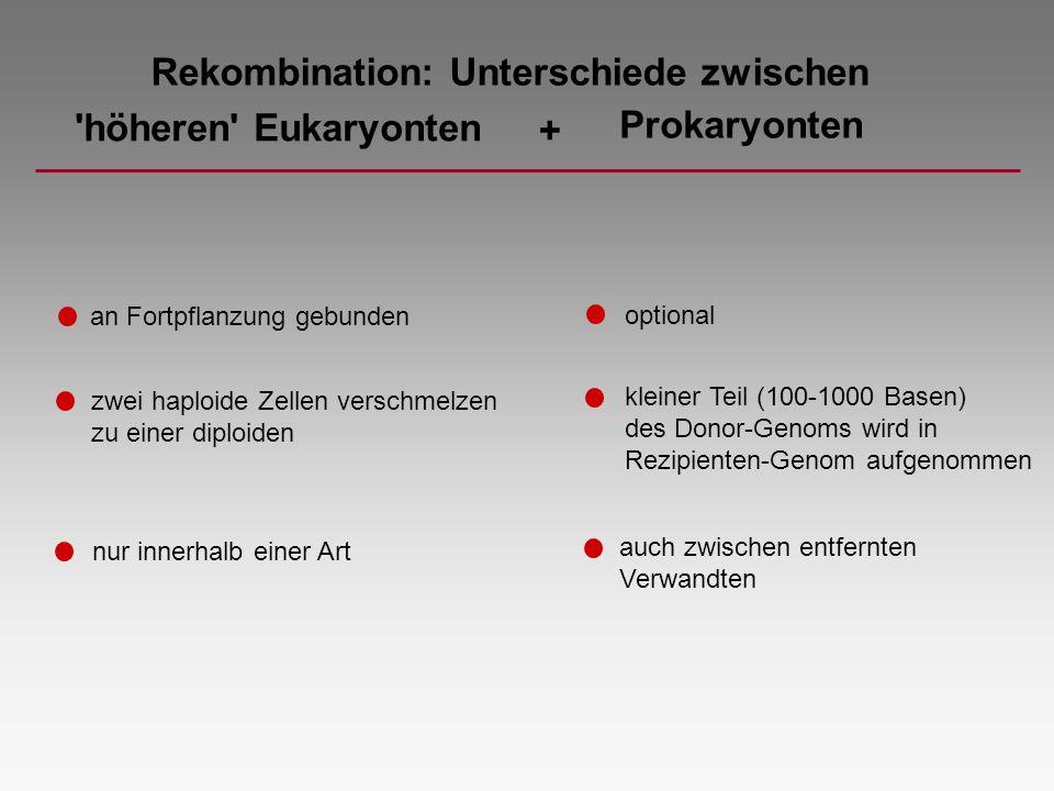 Rekombination: Unterschiede zwischen höheren Eukaryonten +