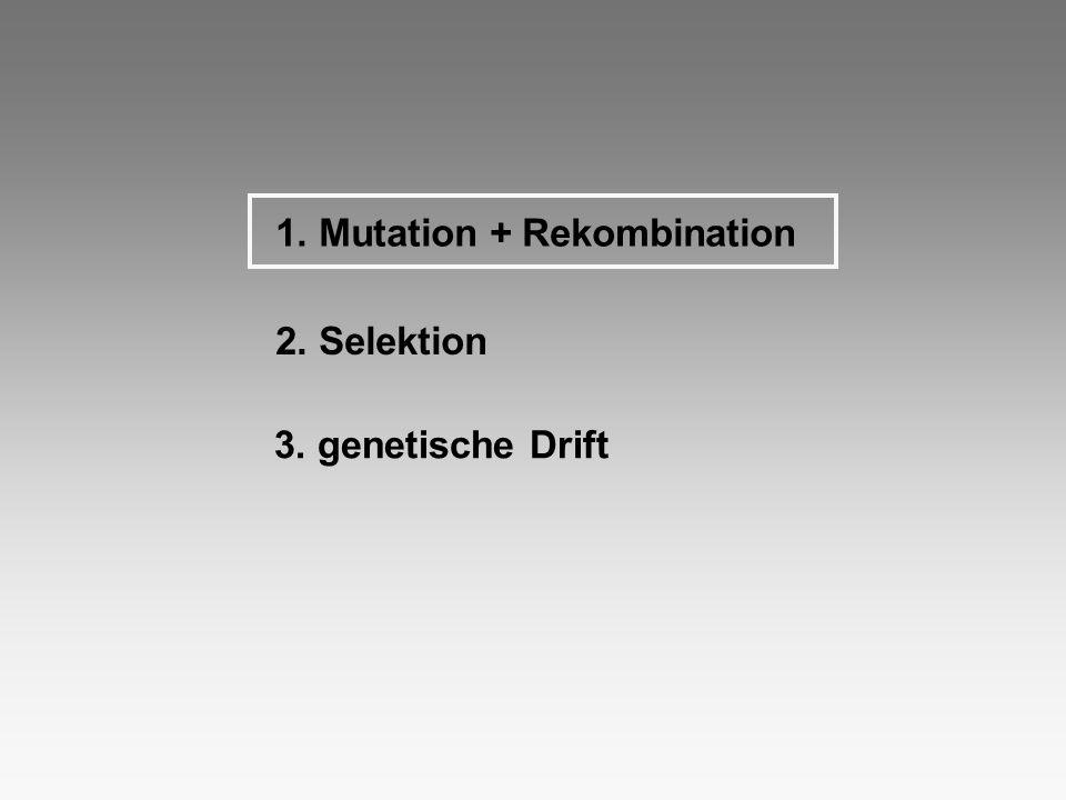 1. Mutation + Rekombination