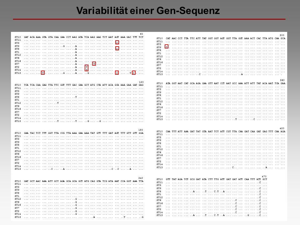 Variabilität einer Gen-Sequenz