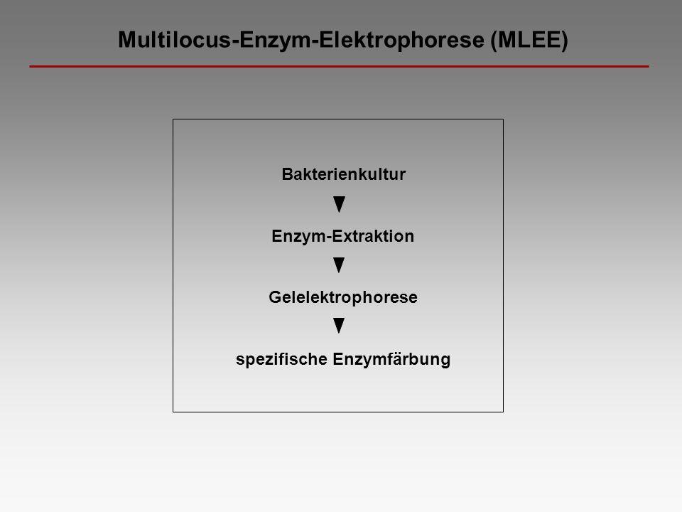 spezifische Enzymfärbung