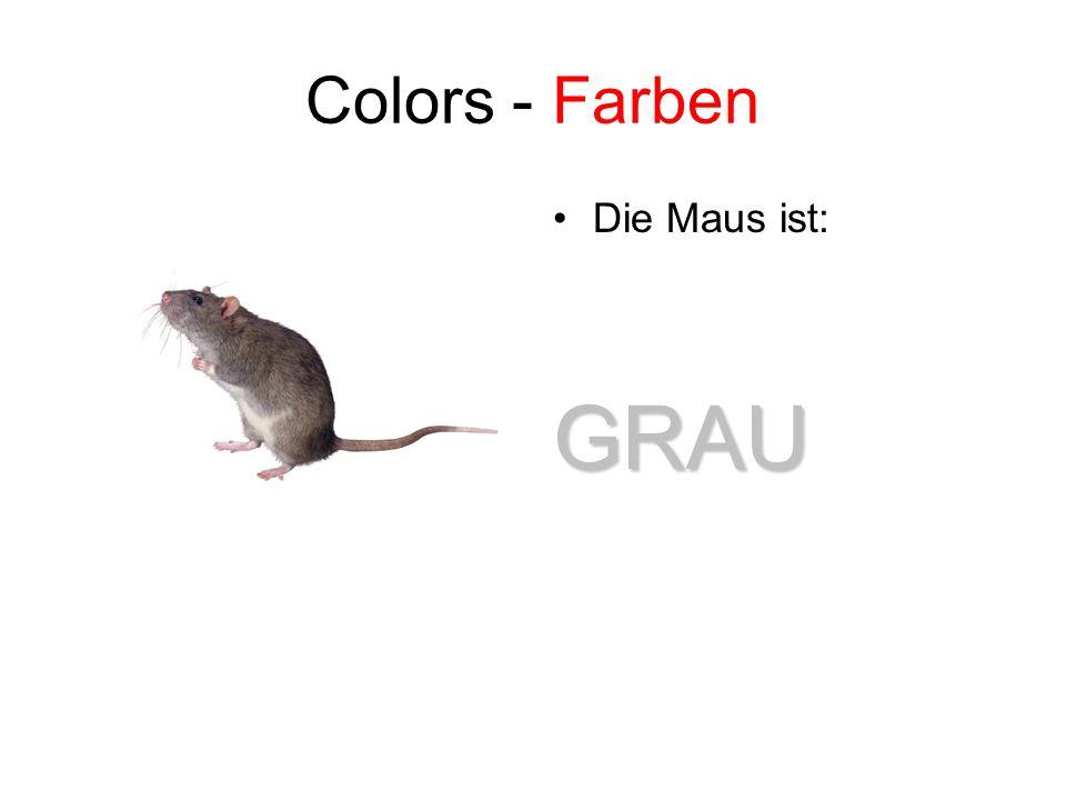 Colors - Farben Die Maus ist: GRAU