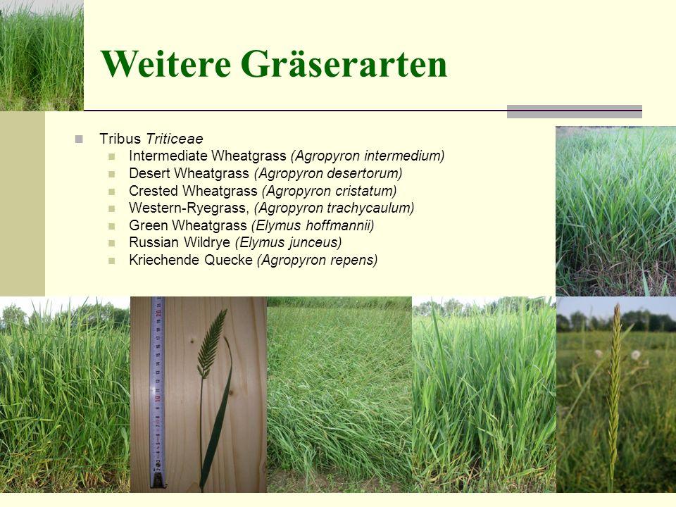 Weitere Gräserarten Tribus Triticeae