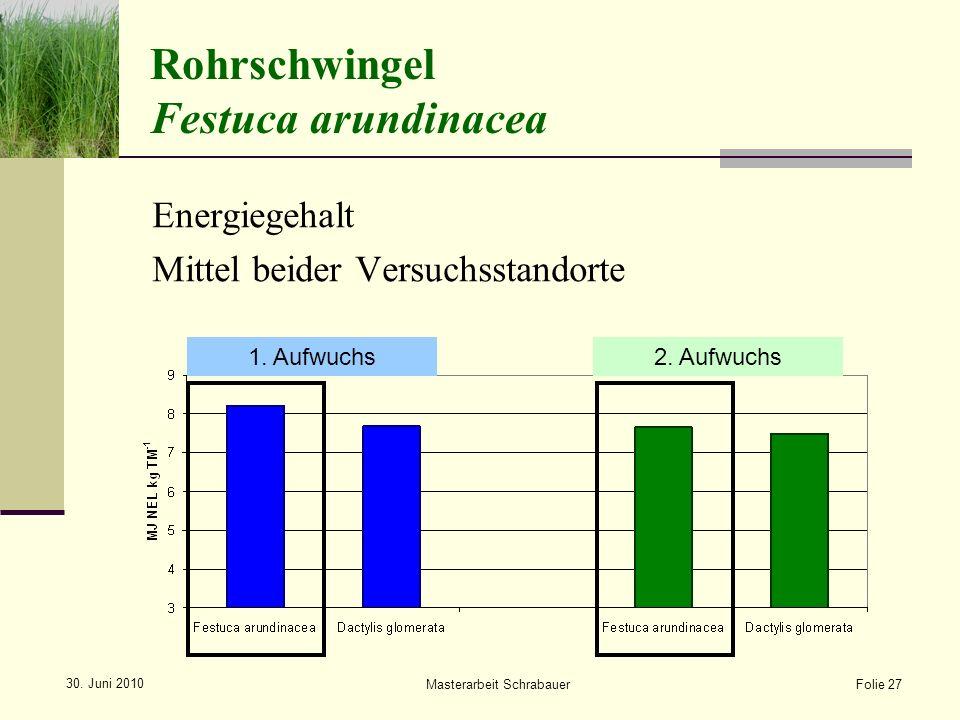 Rohrschwingel Festuca arundinacea
