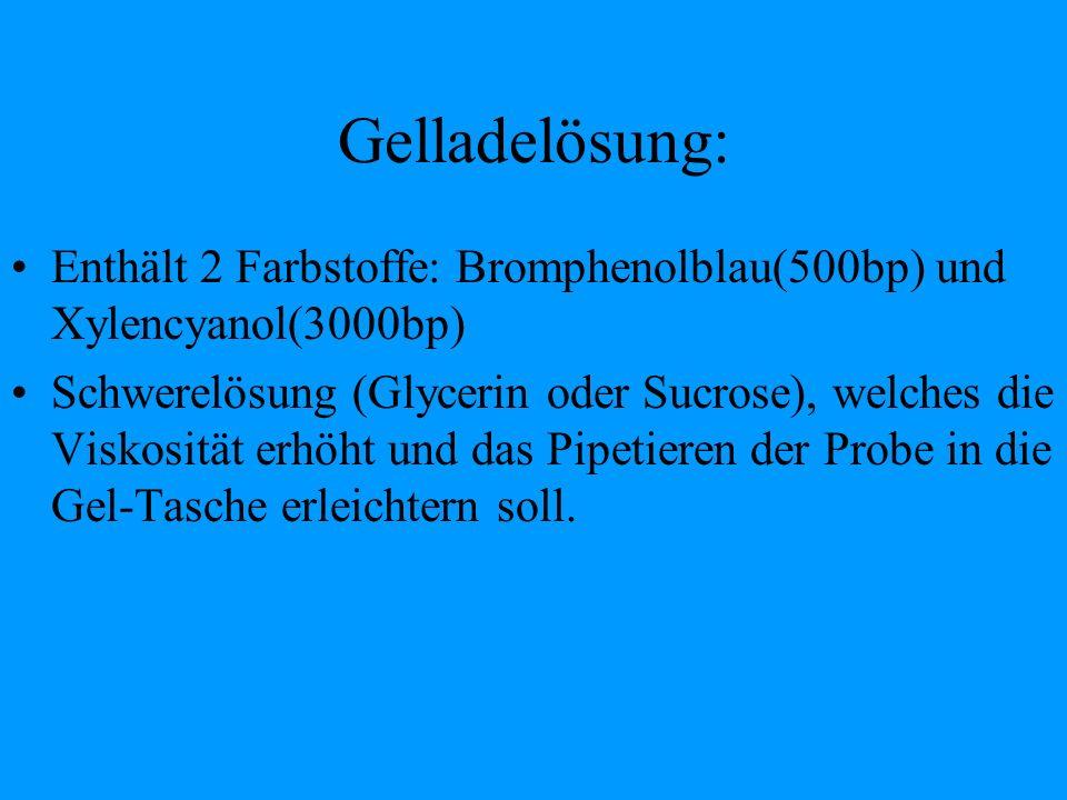 Gelladelösung: Enthält 2 Farbstoffe: Bromphenolblau(500bp) und Xylencyanol(3000bp)