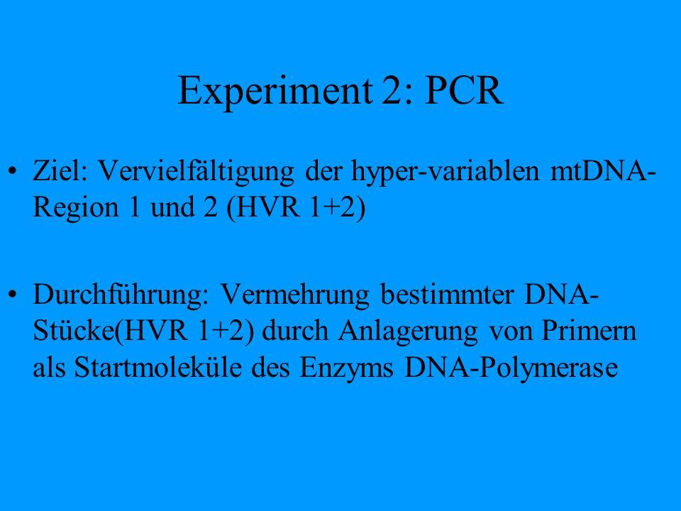 Experiment 2: PCR Ziel: Vervielfältigung der hyper-variablen mtDNA-Region 1 und 2 (HVR 1+2)