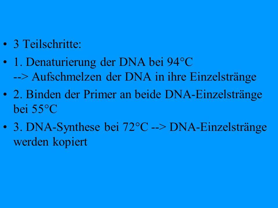 3 Teilschritte: 1. Denaturierung der DNA bei 94°C --> Aufschmelzen der DNA in ihre Einzelstränge.