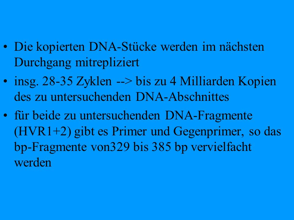 Die kopierten DNA-Stücke werden im nächsten Durchgang mitrepliziert