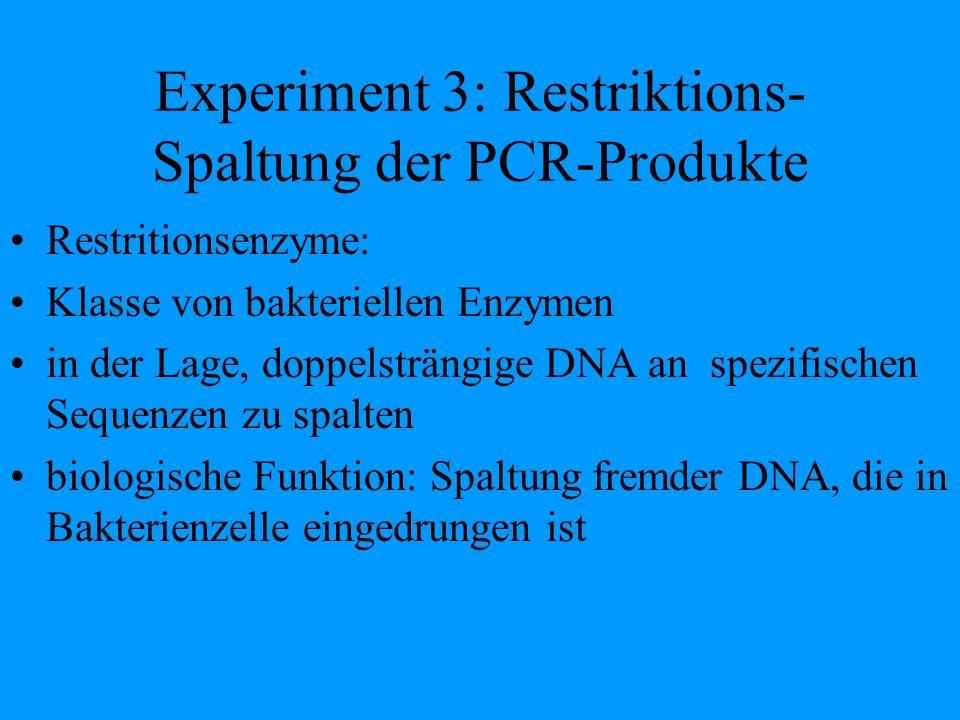 Experiment 3: Restriktions- Spaltung der PCR-Produkte
