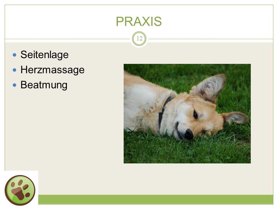 PRAXIS Seitenlage Herzmassage Beatmung