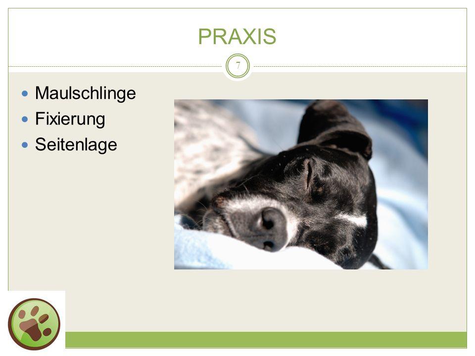 PRAXIS Maulschlinge Fixierung Seitenlage