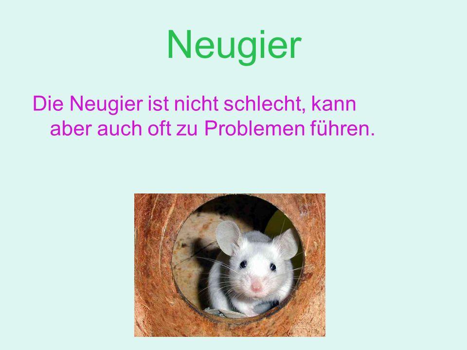 Neugier Die Neugier ist nicht schlecht, kann aber auch oft zu Problemen führen.